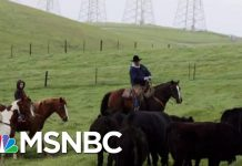 Farmers: Trump's Trade War Leaves Industry 'Worse, Not Better' | The Beat With Ari Melber | MSNBC
