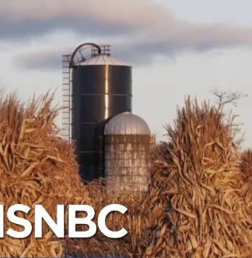 New Ethanol Rules Are Testing Farmers' Support Of President Donald Trump | Velshi & Ruhle | MSNBC